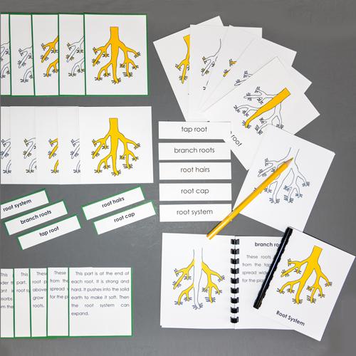 Roots-Complete Nomenclature Set