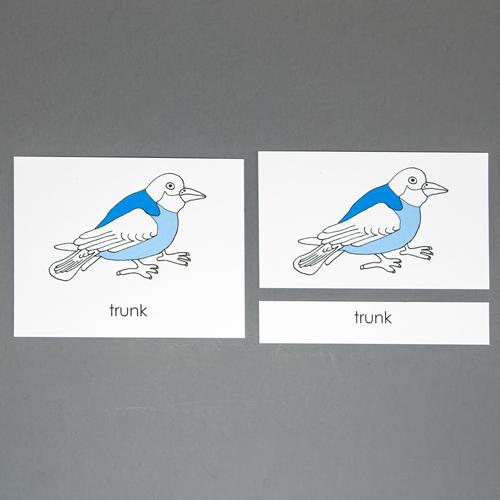 Bird-Three Part Cards