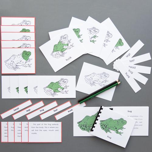 Frog-Complete Nomenclature Set