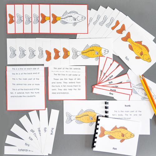 Fish-Complete Nomenclature Set
