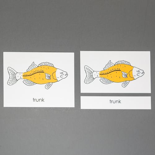 Fish-Three Part Cards