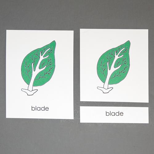 Leaf-Three Part Cards