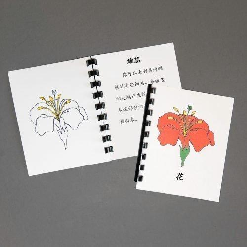 Chinese (Mandarin) Flower Definition Booklet