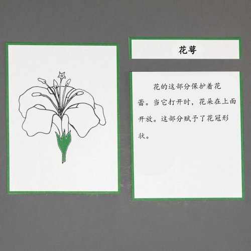 Chinese (Mandarin) Flower Definition Cards