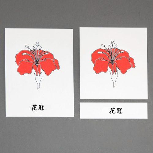 Chinese (Mandarin) Flower Three Part Cards
