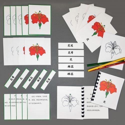Chinese (Mandarin) Flower Whole Set