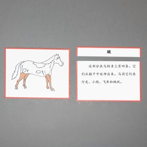 Chinese (Mandarin) Horse Definition Cards