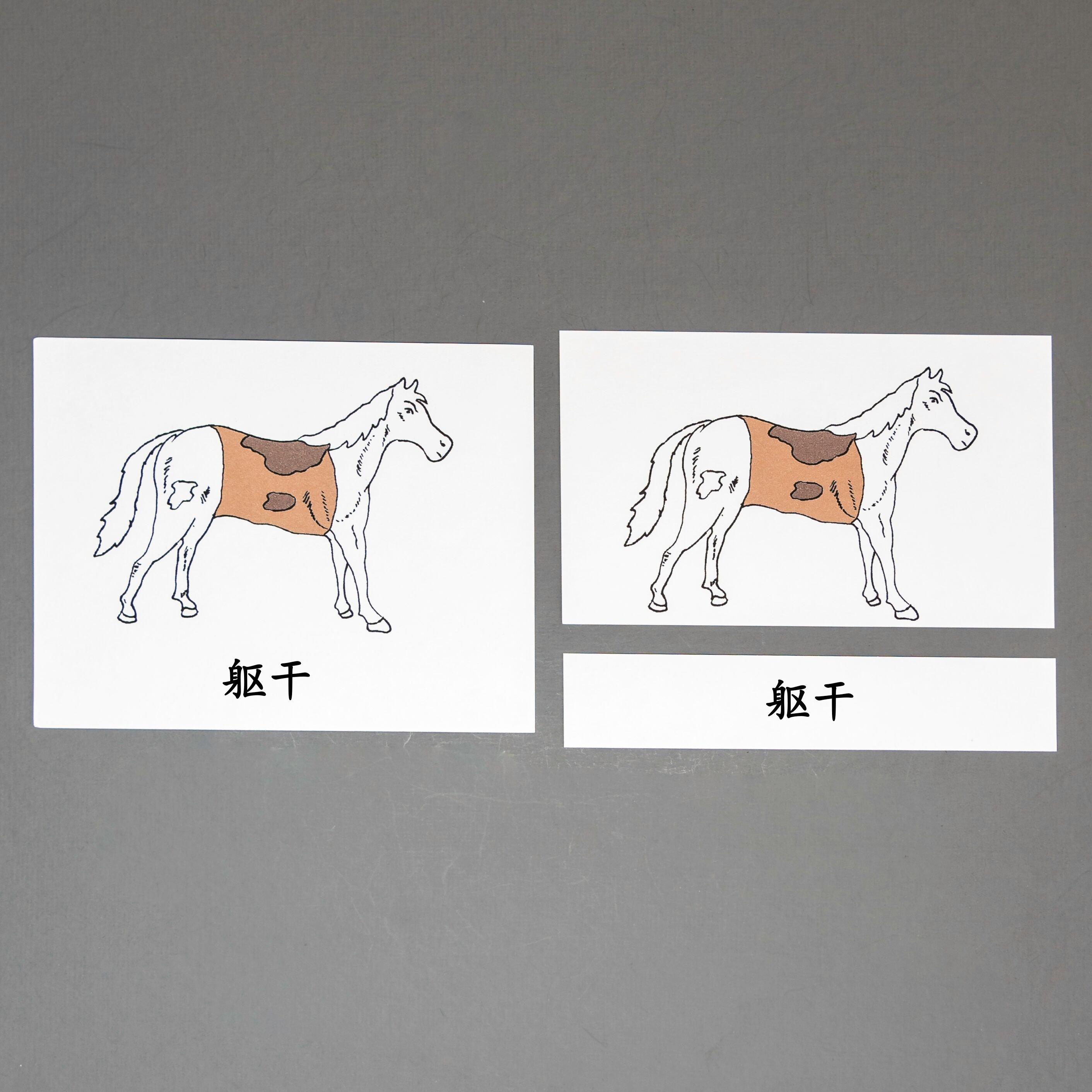 Chinese (Mandarin) Horse Three Part Cards