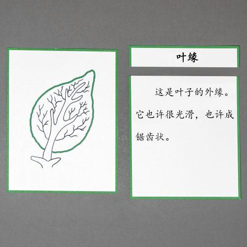 Chinese (Mandarin) Leaf Definition Cards