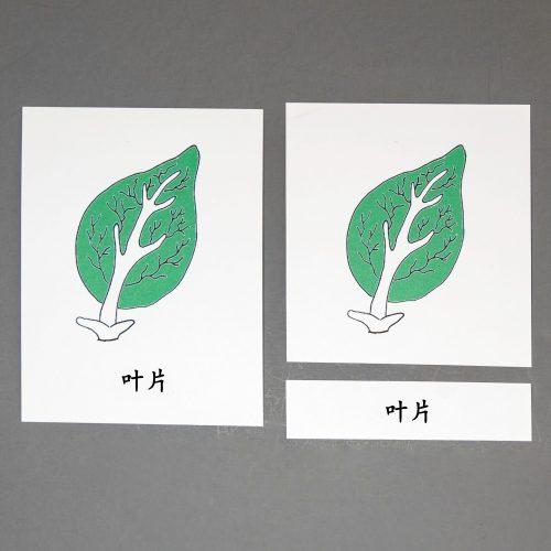 Chinese (Mandarin) Leaf Three Part Cards
