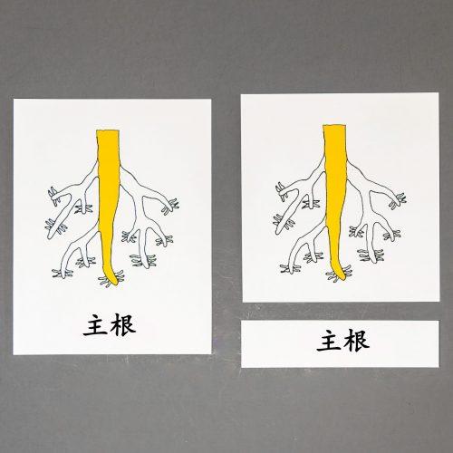 Chinese (Mandarin) Roots Three Part Cards