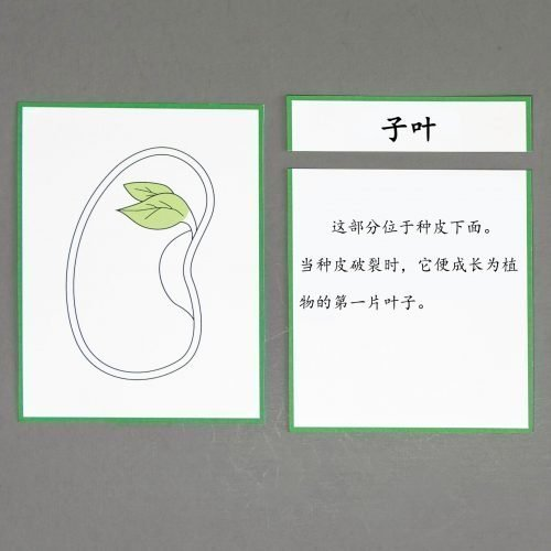 Chinese (Mandarin) Seed Definition Cards