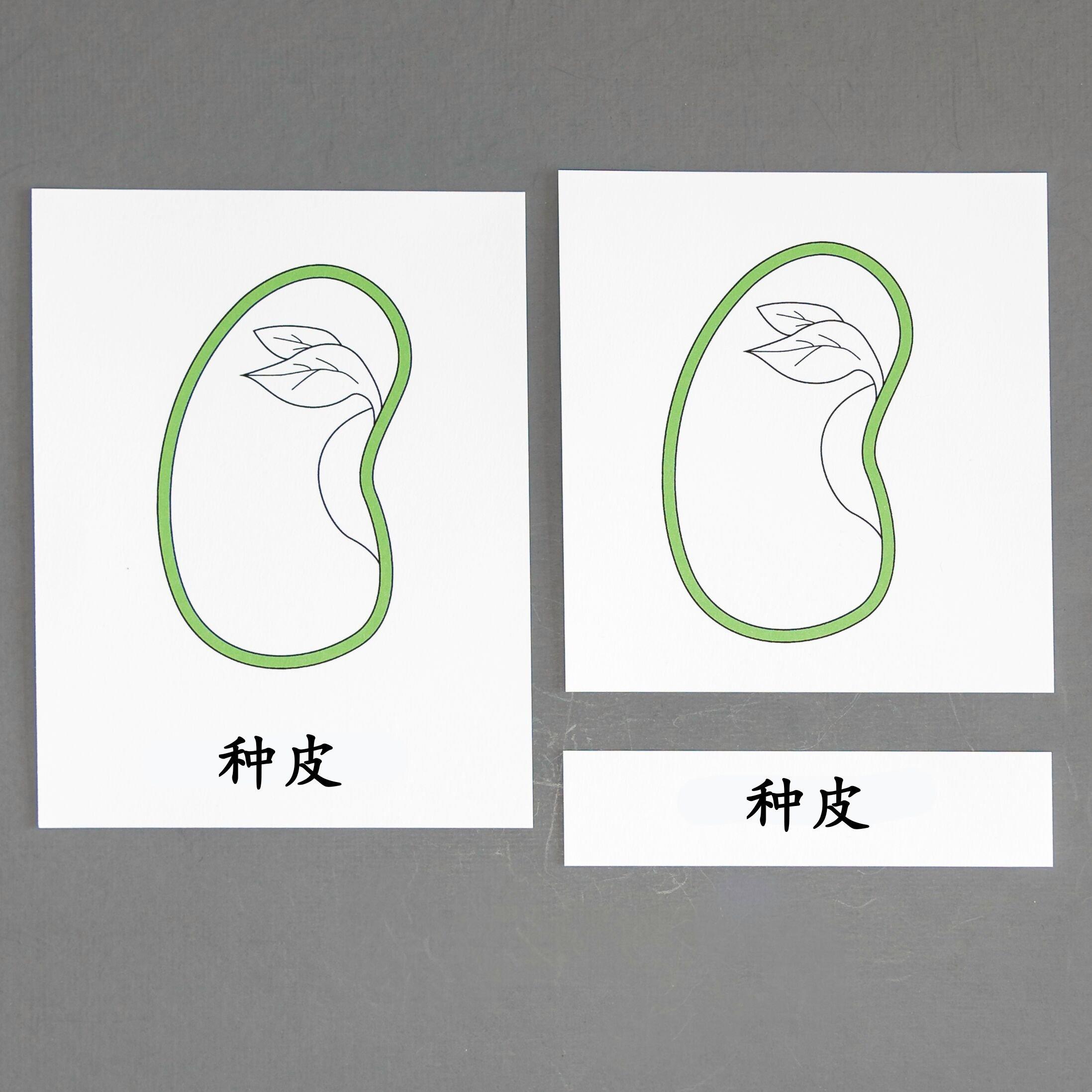 Chinese (Mandarin) Seed Three Part Cards