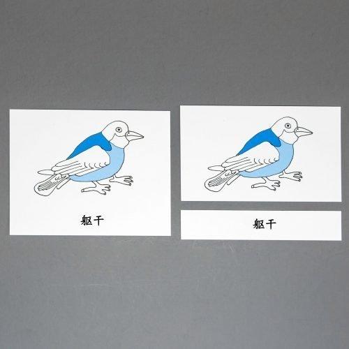 Chinese (Mandarin)Bird Three Part Cards