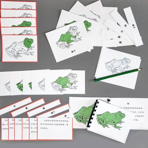 Chinese (Mandarin) Frog Whole Set