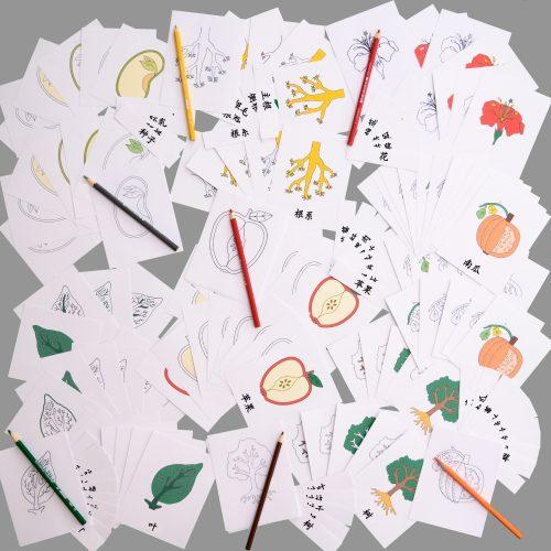 Mandarin Botany 3 Part Card Complete Set