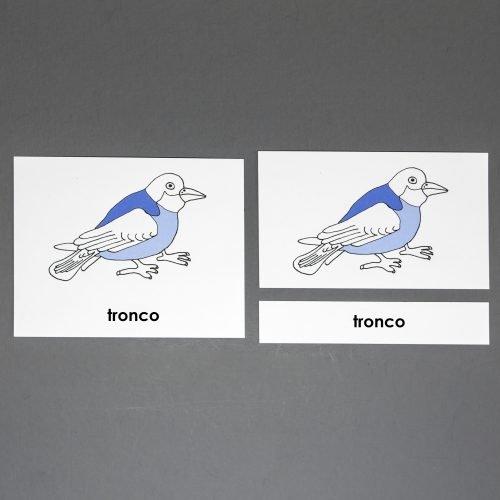 Spanish Bird Three Part Cards