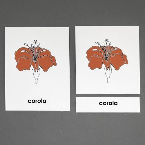 Spanish Flower Three Part Cards