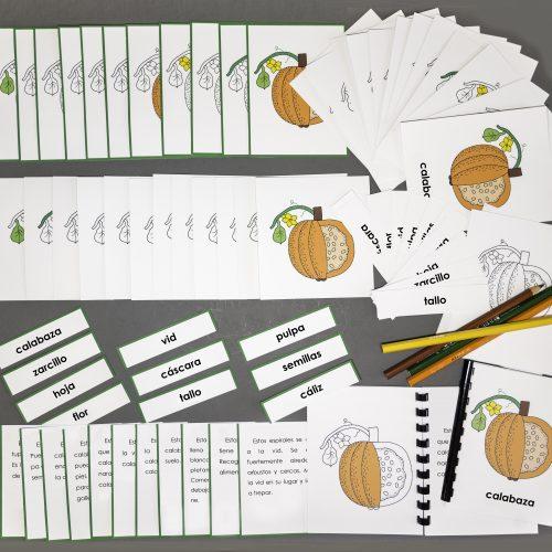 Spanish Pumpkin Complete Set