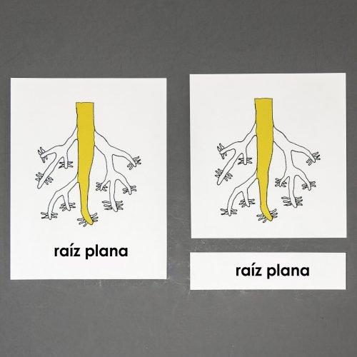Spanish Root Three Part Cards